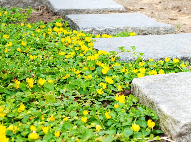 gula-blommor3
