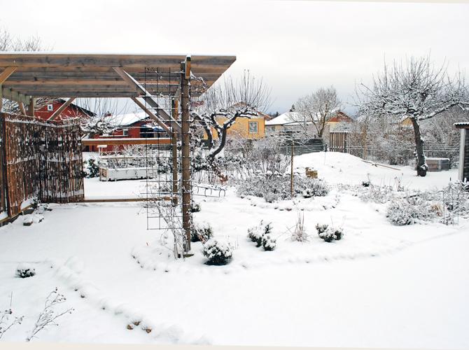 3-njuren-2013-2
