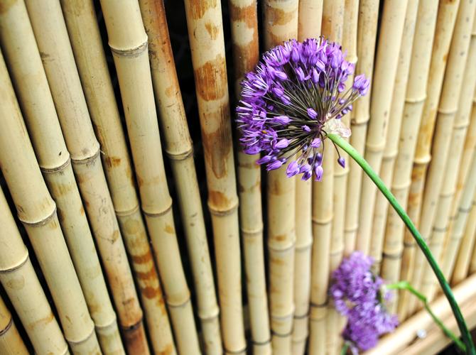 Bambu matta rusta
