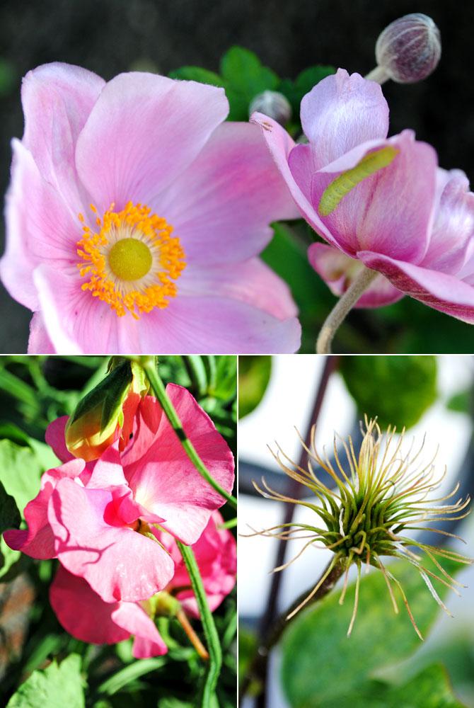 diverse-blomning