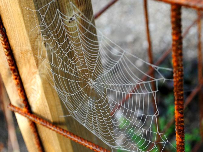 spindelvv