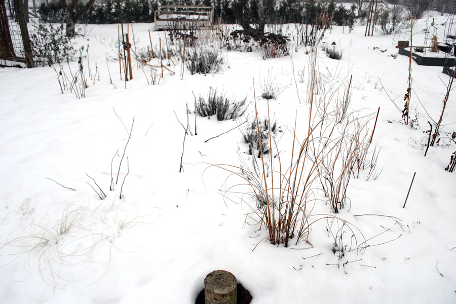 Februari - mitt i trädgården, vid fågelbadet