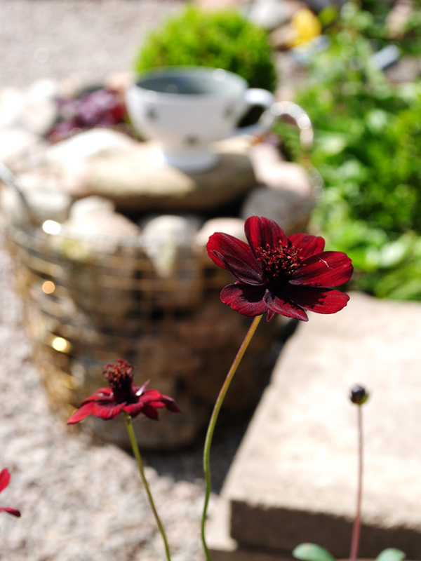 choklad-blomma