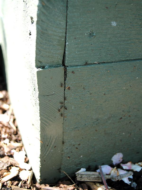 myror-odlingslada