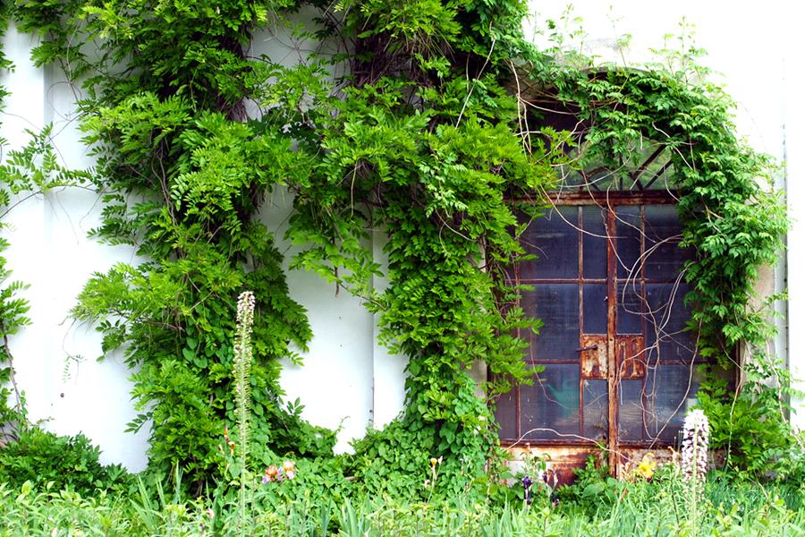botaniska-tradgarden-krakow